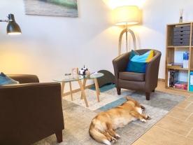 Therapieraum und -hund